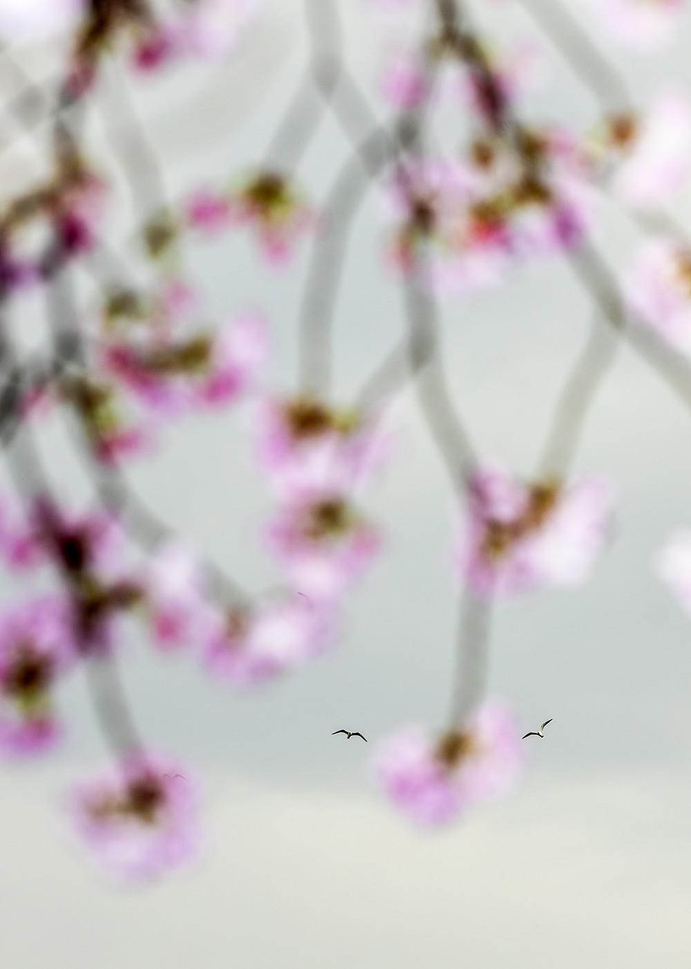 IBASHO_Gallery_yoshinori-mizutani-freebirds-ibashogallery